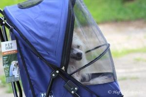 FOTO – Golfky pro psy od PET GEAR jsou vůbec tím nejskladnějším kočárkem pro psy na trhu. Jsou ideální pro štěňata a nejmenší psí plemena do 7 kg váhy (4).
