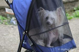 FOTO – Golfky pro psy od PET GEAR jsou vůbec tím nejskladnějším kočárkem pro psy na trhu. Jsou ideální pro štěňata a nejmenší psí plemena do 7 kg váhy (5).