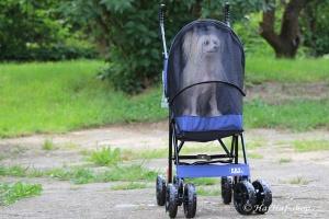 FOTO – Golfky pro psy od PET GEAR jsou vůbec tím nejskladnějším kočárkem pro psy na trhu. Jsou ideální pro štěňata a nejmenší psí plemena do 7 kg váhy.