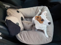 FOTO zákazníků. Autosedačka pro psy – pelíšek pro pohodlné cestování a ochranu autosedadel před psími chlupy, nečistotami a poškozením. (2)
