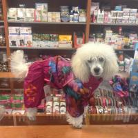 FOTO zákazníků – obleček pro fenky malých až středních plemen – lehoučká pláštěnka FLOWERS PINK od For My Dogs.