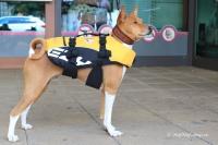 FOTO – plovací vesta pro psy od EZYDOG s unikátní vztlakovou pěnou, reflexními prvky a pohodlnou a promyšlenou konstrukcí, žlutá (7).