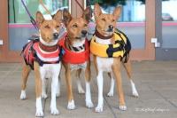FOTO – plovací vesta pro psy od EZYDOG s unikátní vztlakovou pěnou, reflexními prvky a pohodlnou a promyšlenou konstrukcí, žlutá (8).