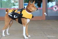 FOTO – plovací vesta pro psy od EZYDOG s unikátní vztlakovou pěnou, reflexními prvky a pohodlnou a promyšlenou konstrukcí, žlutá (5).