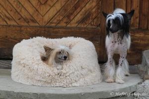 FOTO – Huňatý pelíšek pro psy i kočky od I LOVE PETS – měkké bočnice, vyjímatelný polštář, materiál luxusní soft fleece s dlouhým vlasem (2).