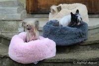 FOTO – Huňatý pelíšek pro psy i kočky od I LOVE PETS – měkké bočnice, vyjímatelný polštář, materiál luxusní soft fleece s dlouhým vlasem, růžový (3).
