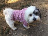 Oblečky pro psy i fenky – foto zákazníků.