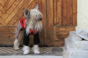 FOTO – Obleček pro psy i fenky – teplá mikina s velurovými rukávy a kapucí, černo-červená (3)
