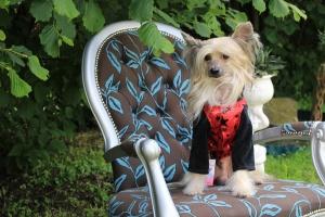 FOTO – Obleček pro psy i fenky – teplá mikina s velurovými rukávy a kapucí, černo-červená