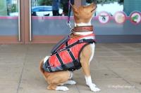 Plovací vesta pro psy Non-stop Dogwear je kvalitní a funkční plovací vesta, která neomezuje v pohybu. Používá materiály z nejmodernějších plovacích vest určených pro lidi (3).