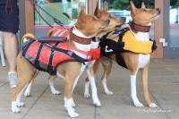 Plovací vesta pro psy Non-stop Dogwear je kvalitní a funkční plovací vesta, která neomezuje v pohybu. Používá materiály z nejmodernějších plovacích vest určených pro lidi (4).