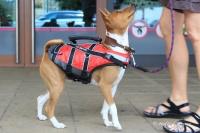 Plovací vesta pro psy Non-stop Dogwear je kvalitní a funkční plovací vesta, která neomezuje v pohybu. Používá materiály z nejmodernějších plovacích vest určených pro lidi.