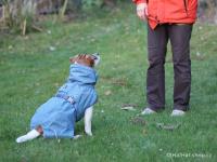 Outdoorový zimní obleček pro psy pro jejich dokonalý teplotní a pocitový komfort. Voděodolný a snadno udržovatelný materiál, termoizolační podšívka, 3M reflexní prvky. Barva modrá (FOTO 2).