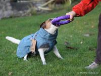 Outdoorový zimní obleček pro psy pro jejich dokonalý teplotní a pocitový komfort. Voděodolný a snadno udržovatelný materiál, termoizolační podšívka, 3M reflexní prvky. Barva modrá (FOTO 3).
