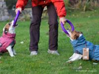 Outdoorový zimní obleček pro psy pro jejich dokonalý teplotní a pocitový komfort. Voděodolný a snadno udržovatelný materiál, termoizolační podšívka, 3M reflexní prvky. Barva modrá (FOTO 4).