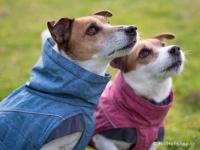 Outdoorový zimní obleček pro psy pro jejich dokonalý teplotní a pocitový komfort. Voděodolný a snadno udržovatelný materiál, termoizolační podšívka, 3M reflexní prvky. Barva modrá (FOTO).