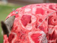 Extra zateplený outdoorový zimní obleček pro psy HURTTA. Voděodolný a snadno udržovatelný materiál, termoizolační folie udržující teplo, 3M reflexní prvky. Barva červená, vzor CORAL CAMO. (FOTO 10)