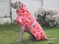 Extra zateplený outdoorový zimní obleček pro psy HURTTA. Voděodolný a snadno udržovatelný materiál, termoizolační folie udržující teplo, 3M reflexní prvky. Barva červená, vzor CORAL CAMO. (FOTO 7)
