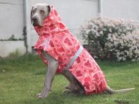 Extra zateplený outdoorový zimní obleček pro psy HURTTA. Voděodolný a snadno udržovatelný materiál, termoizolační folie udržující teplo, 3M reflexní prvky. Barva červená, vzor CORAL CAMO. (FOTO 6)