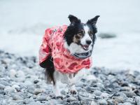 Extra zateplený outdoorový zimní obleček pro psy HURTTA. Voděodolný a snadno udržovatelný materiál, termoizolační folie udržující teplo, 3M reflexní prvky. Barva červená, vzor CORAL CAMO.