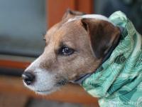 Extra zateplený outdoorový zimní obleček pro psy HURTTA. Voděodolný a snadno udržovatelný materiál, termoizolační folie udržující teplo, 3M reflexní prvky. Barva zelená, vzor PARK CAMO. (FOTO 2)