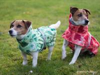 Extra zateplený outdoorový zimní obleček pro psy HURTTA. Voděodolný a snadno udržovatelný materiál, termoizolační folie udržující teplo, 3M reflexní prvky. Barva zelená, vzor PARK CAMO. (FOTO 4)