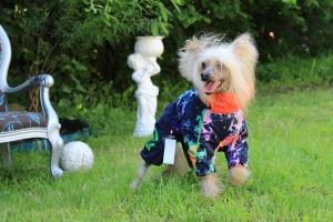 Obleček pro fenky – teplý zimní overal od For My Dogs. Vylepšené zapínání na zádech, odnímatelná kapuce, pevný límec a rukávy s vnitřní manžetou. (4)