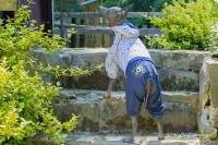 Obleček pro psy i fenky – teplejší overal od For My Dogs s barevným potiskem. Zapínání na druky na bříšku, pružné lemy (2)