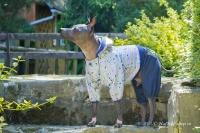 Obleček pro psy i fenky – teplejší overal od For My Dogs s barevným potiskem. Zapínání na druky na bříšku, pružné lemy (3)