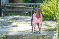Obleček pro psy i fenky – teplejší overal od For My Dogs s barevným potiskem (3)