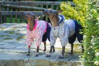 Obleček pro psy i fenky – teplejší overal od For My Dogs s barevným potiskem (4)