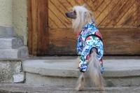 FOTO – Obleček pro psy i fenky – overal BUTERFLIES (3)