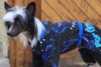 FOTO – Obleček pro psy i fenky – overal TIGER BLACK (3)