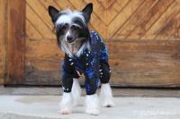 FOTO – Obleček pro psy i fenky – overal TIGER BLACK (5)