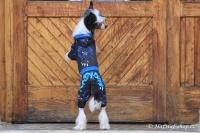 FOTO – Obleček pro psy i fenky – overal TIGER BLACK (6)