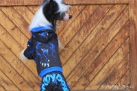 FOTO – Obleček pro psy i fenky – overal TIGER BLACK (7)