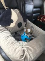 FOTO zákazníků. Autosedačka pro psy – pelíšek pro pohodlné cestování a ochranu autosedadel před psími chlupy, nečistotami a poškozením. (6)