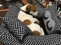 FOTO zákazníků. Autosedačka pro psy – pelíšek pro pohodlné cestování a ochranu autosedadel před psími chlupy, nečistotami a poškozením.