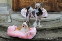 FOTO – Plyšový pelíšek pro psy od For My Dogs. Měkoučké bočnice, nadýchaný vyjímatelný polštář, celý pelíšek je vyrobený z plyšového flísu. Barva růžová (2).