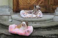 FOTO – Plyšový pelíšek pro psy od For My Dogs. Měkoučké bočnice, nadýchaný vyjímatelný polštář, celý pelíšek je vyrobený z plyšového flísu. Barva růžová (3).