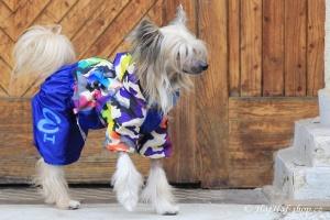 FOTO – Pláštěnka pro psy od FMD – nový super komfortní a funkční model COLOURFUL CAMOUFLAGE (4)