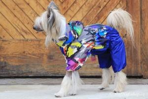 FOTO – Pláštěnka pro psy od FMD – nový super komfortní a funkční model COLOURFUL CAMOUFLAGE (5)