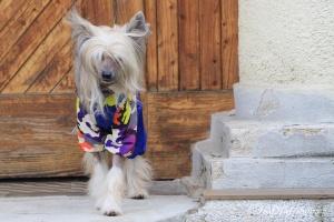 FOTO – Pláštěnka pro psy od FMD – nový super komfortní a funkční model COLOURFUL CAMOUFLAGE (6)