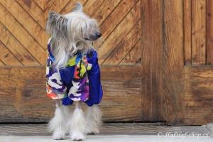 FOTO – Pláštěnka pro psy od FMD – nový super komfortní a funkční model COLOURFUL CAMOUFLAGE