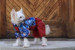 FOTO – Pláštěnka pro fenky FROZEN FLOWERS od ForMyDogs (2)