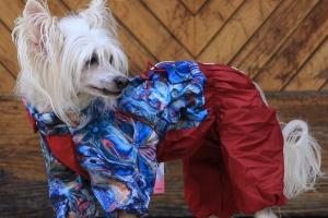 FOTO – Pláštěnka pro fenky FROZEN FLOWERS od ForMyDogs (3)