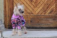 FOTO – Obleček pro psy – světle fialová pláštěnka pro fenky ForMyDogs LILLAC