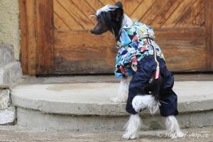 FOTO – Obleček pro psy – pláštěnka FMD, nový super komfortní a funkční model SNEAKERS (6)