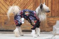 FOTO – Pláštěnka pro psy od ForMyDogs, černá s potiskem (2)