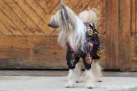 FOTO – Pláštěnka pro psy od ForMyDogs, černá s potiskem (4)